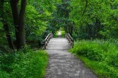 Skog som nära korsar Arkivbild
