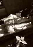 gammala dockor Arkivfoto