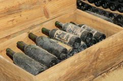 Gammala flaskor i winekällare royaltyfri bild