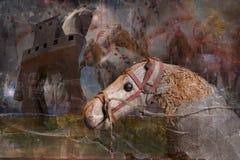 gammala hästar royaltyfri foto