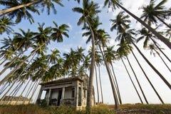 Gammala hus och palmträd Arkivfoto