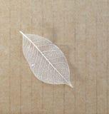 Gammala leaves återanvänder på paper bakgrund Arkivbilder