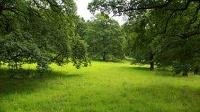 gammala oaks Fotografering för Bildbyråer