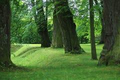 Gammala oaks i park Arkivbilder