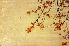gammala paper texturer för blomma Royaltyfria Foton
