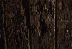 Gammala trän Arkivfoto