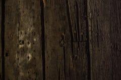 Gammala trän Arkivbild