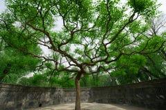 Gammala trees i den gammala sommarslotten Royaltyfri Foto