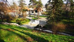 Gammala trees i parken Royaltyfria Bilder