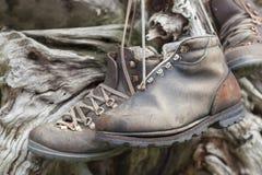 Gammalmodiga fotvandra skor som hänger på stammen. Arkivbilder