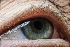 Gammalt öga - detalj royaltyfria foton