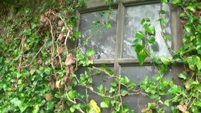Gammalt övergett fönster med gräs över lager videofilmer