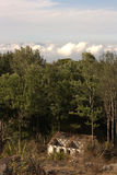 Gammalt övergett hus i skog Arkivbild