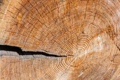 Gammalt argt wood sågsnitt med en stor spricka och många årliga cirklar för microcracks och royaltyfria foton