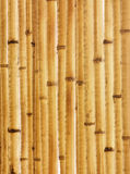 Gammalt beige bambustaketfragment Fotografering för Bildbyråer
