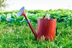 Gammalt bevattna för metall kan arbeta i trädgården på det ljust - grönt gräs royaltyfri bild