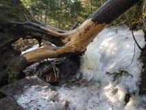 Gammalt björkträd som är stupat över en djupfryst vattenfall arkivbilder