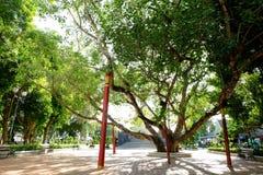 Gammalt Bohhi träd på Suphanburi Fotografering för Bildbyråer