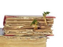 Gammalt boka från vilket spirade groddar Arkivbild