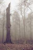 Gammalt brutet träd i höstdag Fotografering för Bildbyråer