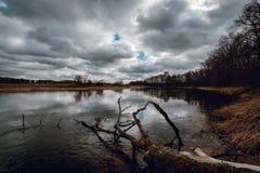 Gammalt brutet träd som lägger på flodvatten royaltyfri bild