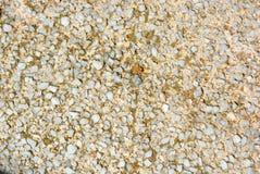 Gammalt cement med en matte grå glass smula under solen royaltyfri bild
