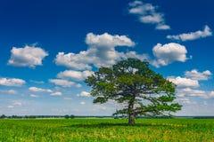 Gammalt ekslut upp med stackmolnmolnen, Litauen Europa royaltyfri foto
