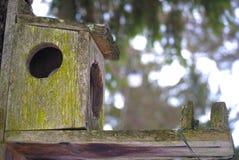 Gammalt fågel-/ekorrehus som hänger från träd i vinter royaltyfri foto