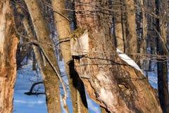 Gammalt fågelhus på forntida träd Arkivfoto
