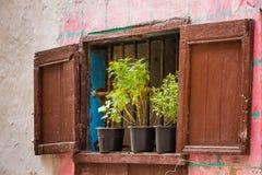 Gammalt fönster i Essaouira Royaltyfria Foton