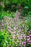 Rosa färg blommar i Giverny Royaltyfri Foto