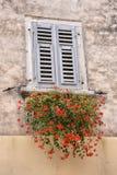 Gammalt fönster med blommor Arkivbild