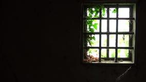 Gammalt fönster med stänger i inre av det gamla och övergav huset lager videofilmer