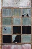 Gammalt fönster som förstörs och överges Royaltyfri Fotografi