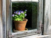 gammalt fönsterträ Arkivfoton