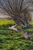 Gammalt förfalla träd bredvid en ström Arkivbilder
