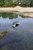 gammalt flodgummihjul Arkivfoto