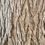 Gammalt fragment för textur för trädskäll Arkivbilder