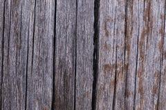 Gammalt grå färgbräde som täckas med svampen och mossa Arkivbilder