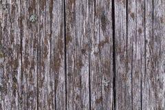 Gammalt grå färgbräde som täckas med svampen och mossa Arkivfoto
