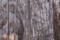 Gammalt grå färgbräde som täckas med svampen och mossa Royaltyfria Bilder