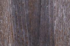 Gammalt grå färgbräde som täckas med svampen och mossa Royaltyfria Foton