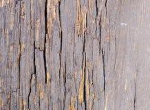Gammalt grått trä med sprickatextur arkivbild