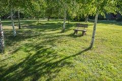 Gammalt handgjort träbänkanseende på gräsmatta nära vita björkar Royaltyfri Bild