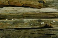 gammalt havsträ Arkivfoton