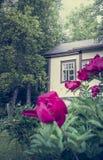 Gammalt hus med pionträdgården och träd Fotografering för Bildbyråer