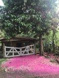 Gammalt hus med rosa blad arkivfoton