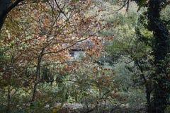 Gammalt hus som döljas av träden royaltyfri fotografi