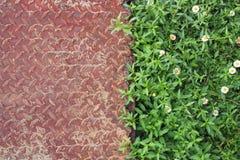 Gammalt järnark med rostiga modeller och växt, blomma som blommar på bakgrund royaltyfri foto