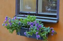 Gammalt kaféfönster med blommaasken, på en orange stucc Arkivfoton